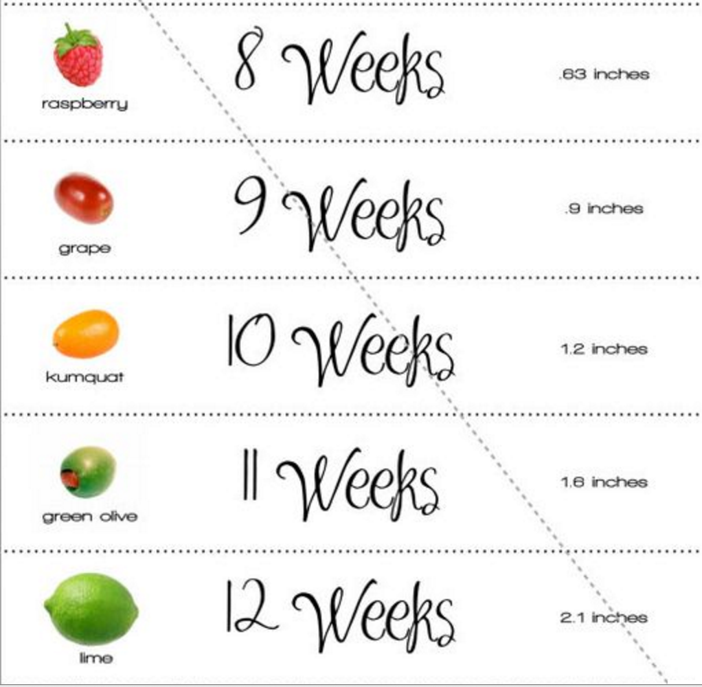 How long does the pregnancy trimesters and their main features 17